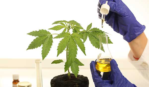 CBD Oil For Anxiety, Epilepsy, Cancer, Diabetes, Pain, Arthritis And Other Diseases
